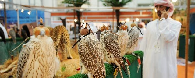 Abu Dhabi International Hunting and Equestrian Exhibition 2017 Event Details at BookMyShow